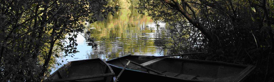 Le marais d'Arleux. Photo site Arleux
